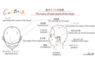 000.The name of each point of the head .ai
